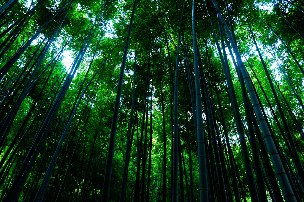 竹の寺(1)