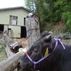 子牛を写し終えたKX