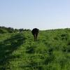 健康状態を確認しに来た私から離れていく牛