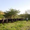 放牧前の牛の様子を確認する父たち