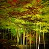 宝厳院の竹