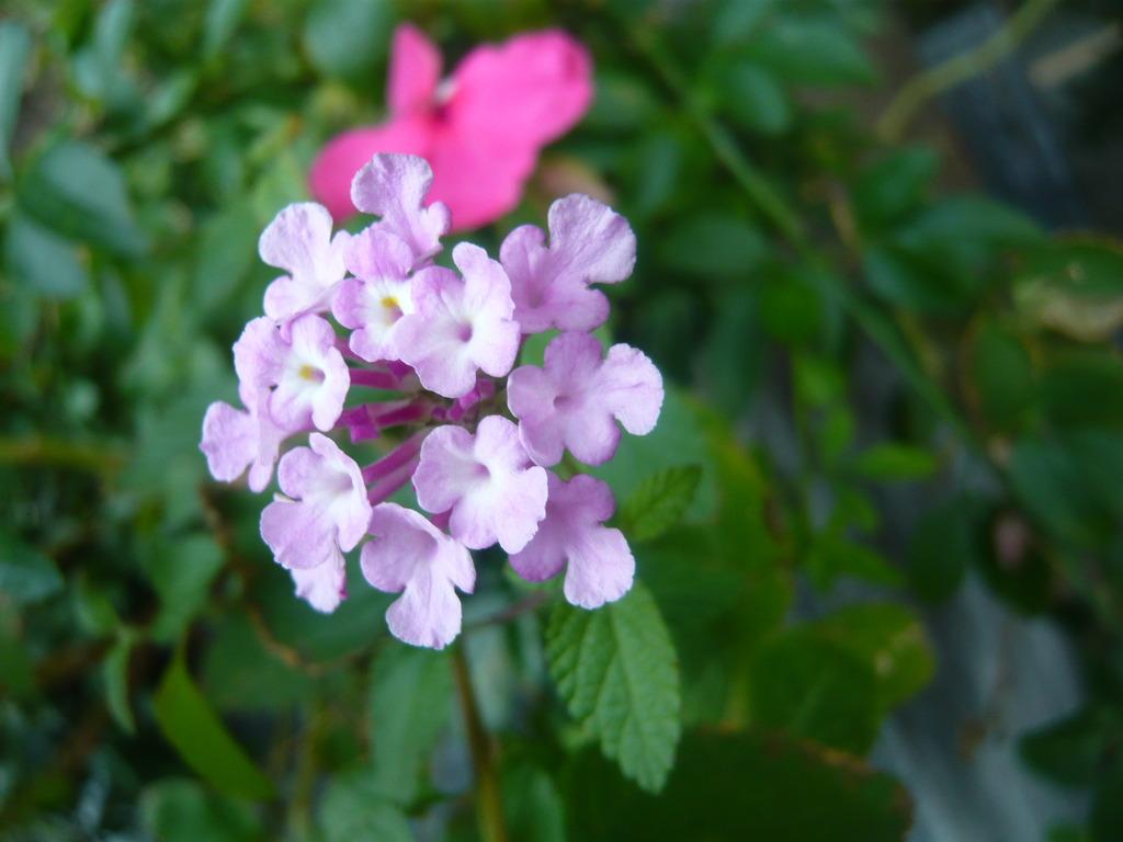 little purple