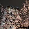 Hills&Sakura