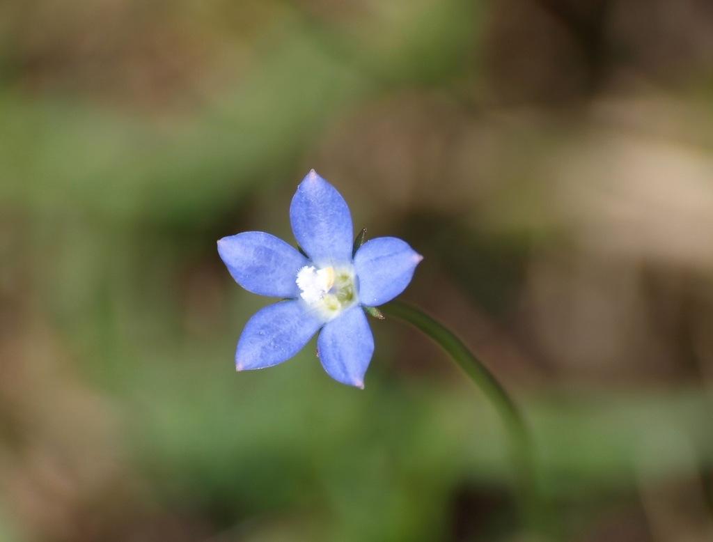 川辺に咲いていた花