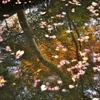 水面に反射する紅葉の木々
