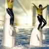 シロイルカとジャンプ