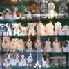 浅草の犬たち
