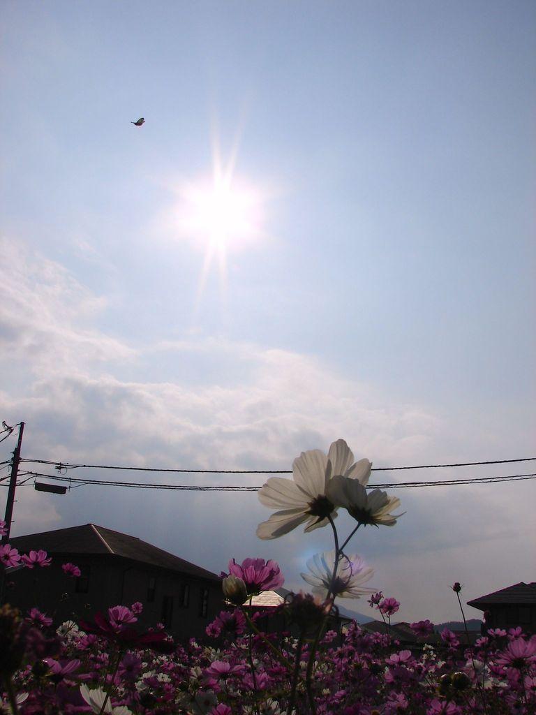 陽(DSC05428b)