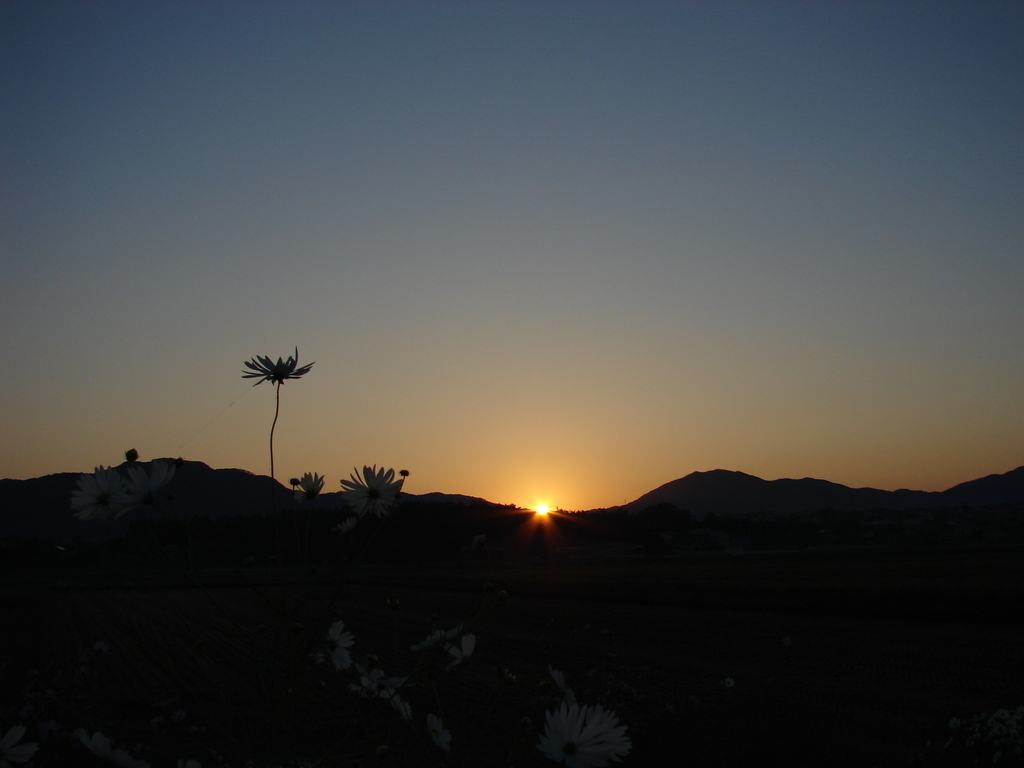 ある日の朝(DSC00654)