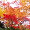 秋深し・・・