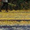 黄色に覆われて・・・