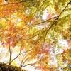 円通院の秋