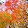 秋深し・・・2