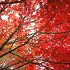 燃える秋-2