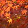 木々の冬支度