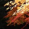 神戸市立森林植物園3