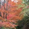 神戸市立森林植物園1