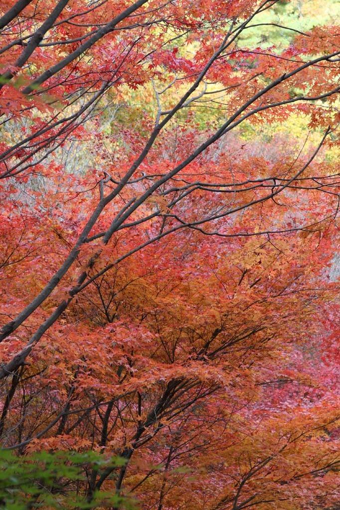神戸市立森林植物園2