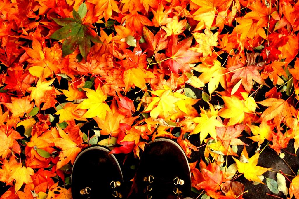 ブーツと秋