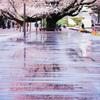 もうひとつの桜