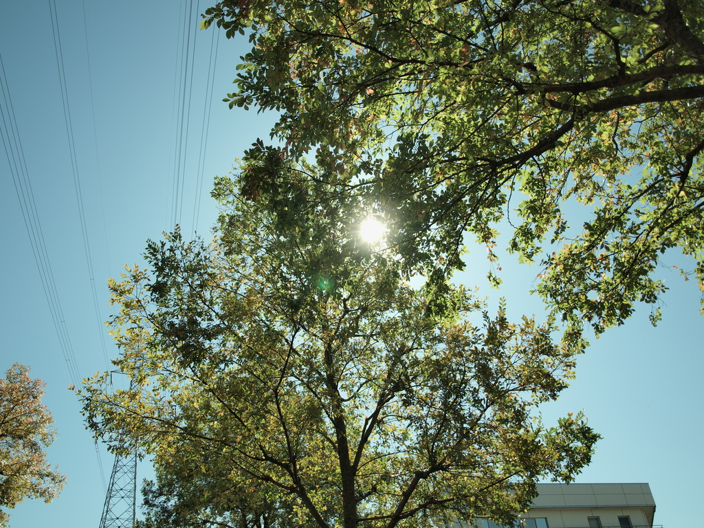 枝越しの逆光
