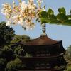 五重塔と花