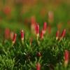 プランターの草?、花?①