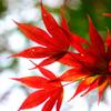 紅葉がキラリ