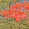 紅葉(油絵風)