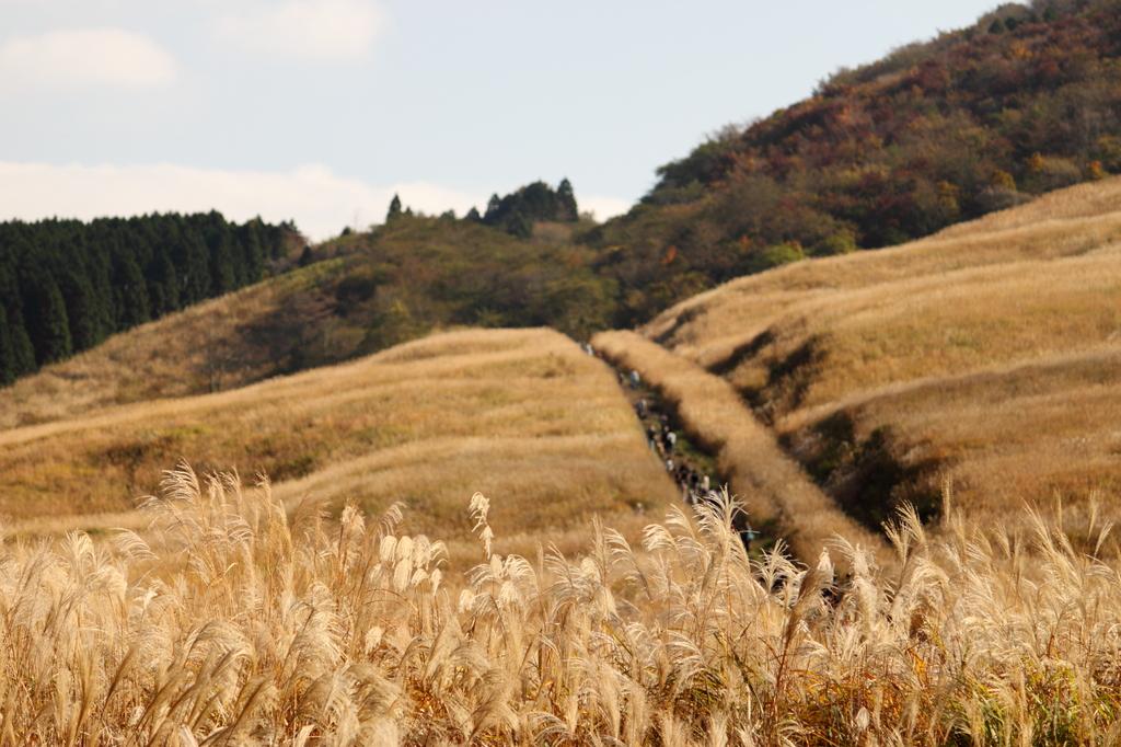 黄金色の道