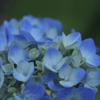 Blue No.013
