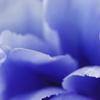 Blue No.014