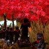 ワンプッシュ! 赤い傘