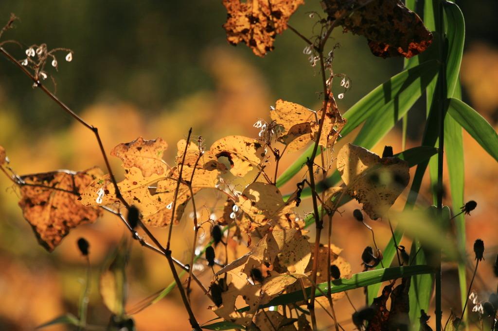 秋の日差し