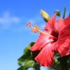 秋空に向かう夏の花