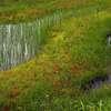 栂池自然園にて-3