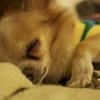 心地よい眠りへ