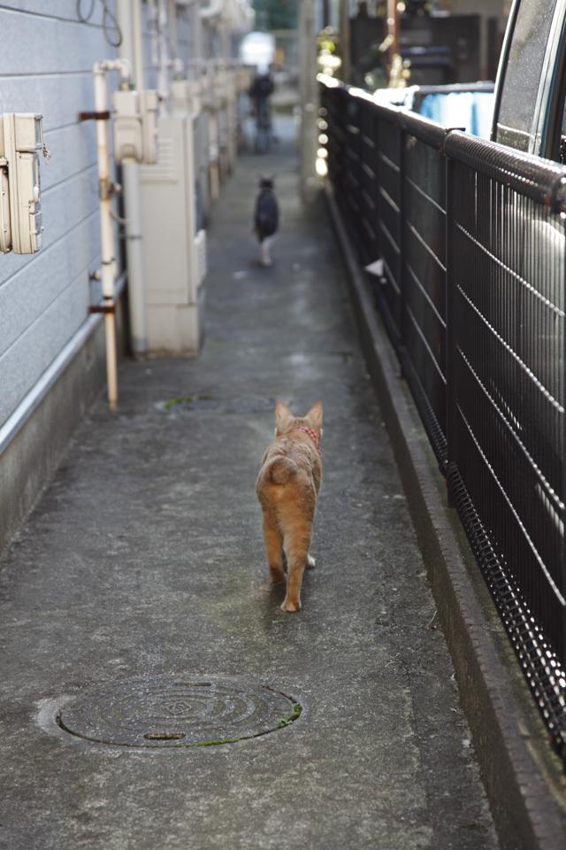 Cat Road