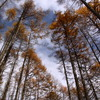 林道から見上げる