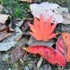 落ち葉の華