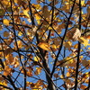 秋色の格子