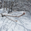 白馬の樹氷