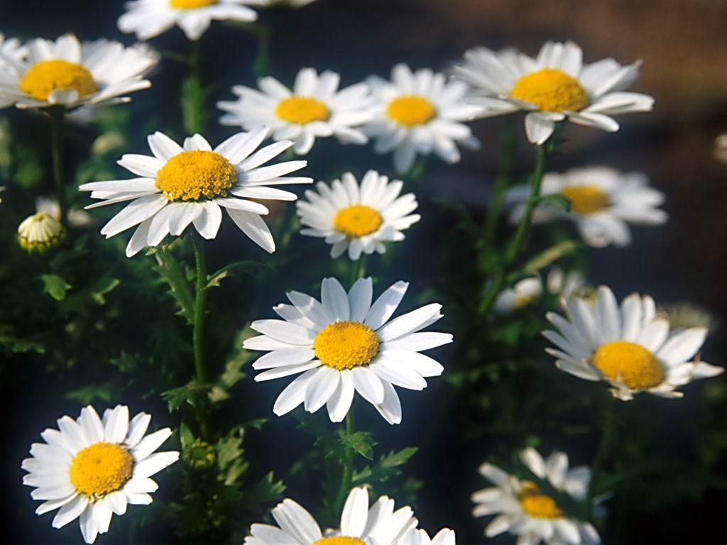 Flower-001