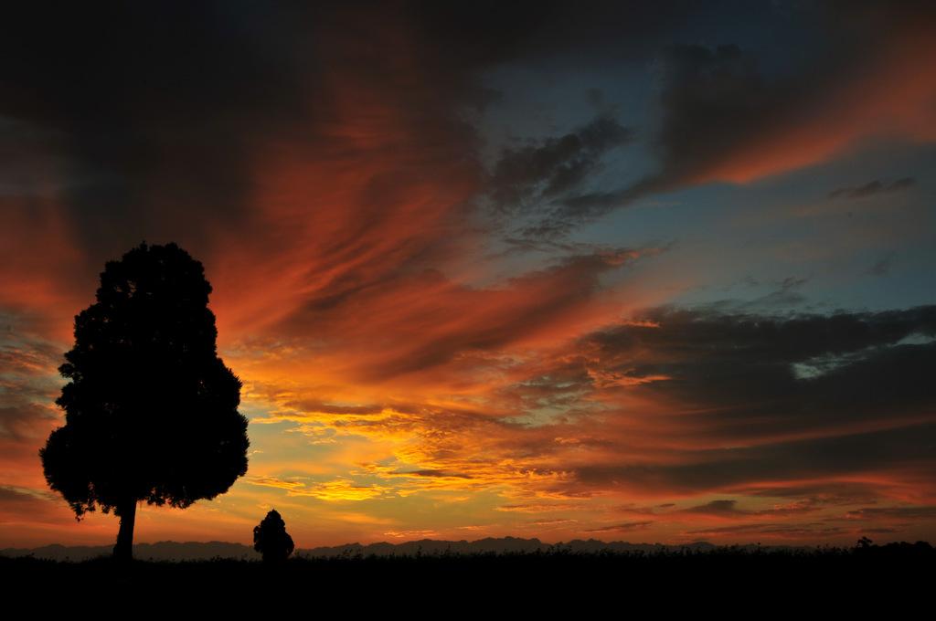 朝日と立ち木
