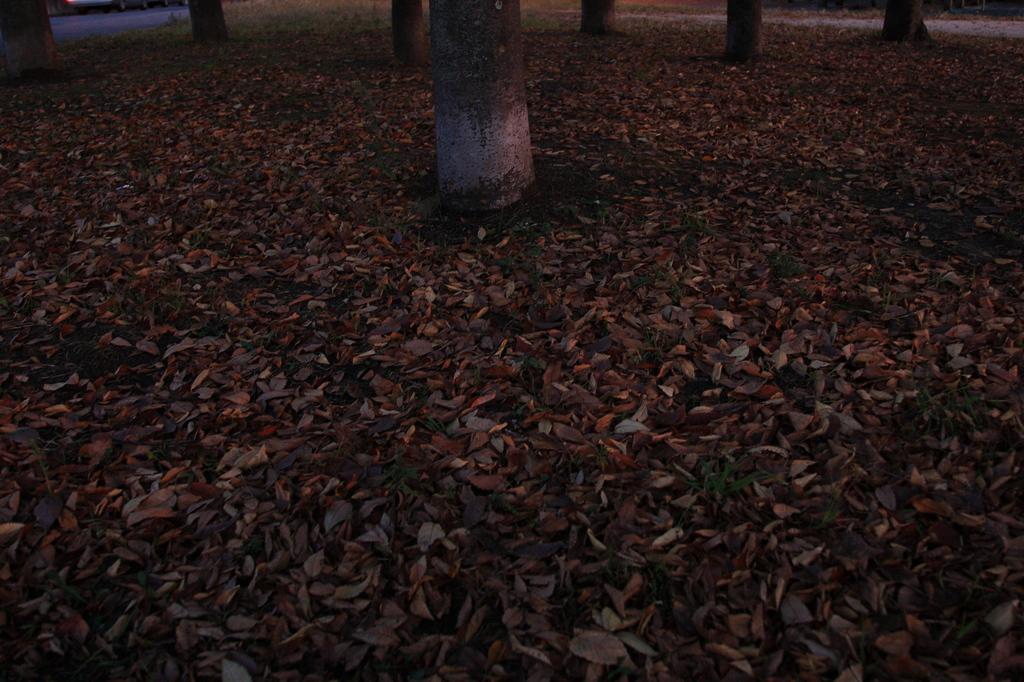 一面落ち葉