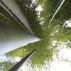 まっすぐな竹
