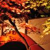 本土寺紅葉ライトアップ3