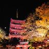 本土寺紅葉ライトアップ5