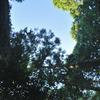 木陰から見上げる秋空