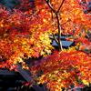 IMG_1253修善寺の紅葉